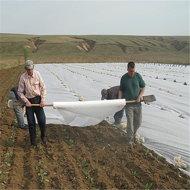 Agricultural cover pp nonwoven fabric with uv for agricultural protection non woven fabric roll