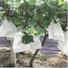 2020 Recommend Biodegradable nonwoven fabric Fruit protection bag