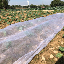 Pp Agricultural Nonwoven Fabric Anti UV Treated Pp Non Woven Crop Row Cover