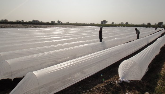 China Sunshine Company Recommend 60g 1m*50m Roll Pp Nonwoven Fabric for Agriculture